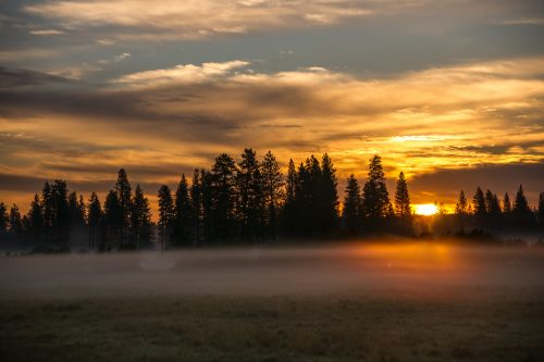 Misty Meadow at Sunrise